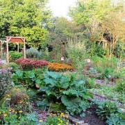 Garten_im_Sommer